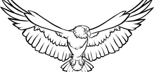 шаблон орла