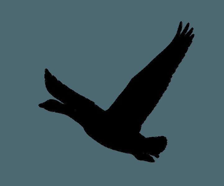 шаблон утки