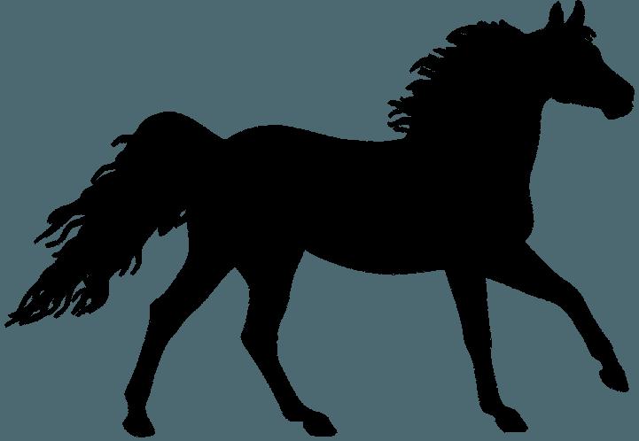 силуэт лошади