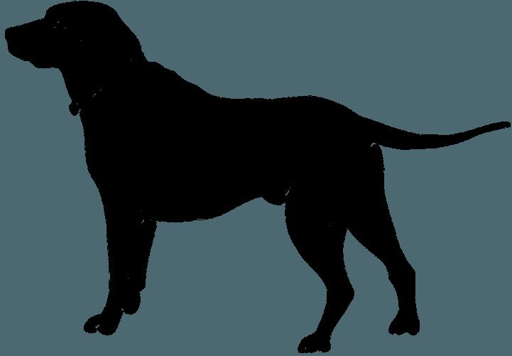 шаблон собаки