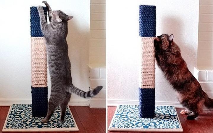 когтеточки для кошек