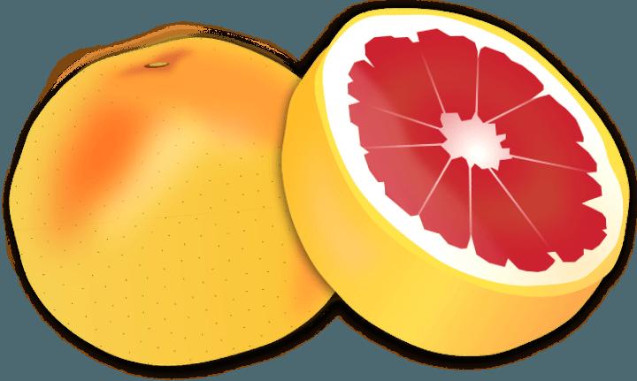 шаблон грейпфрут