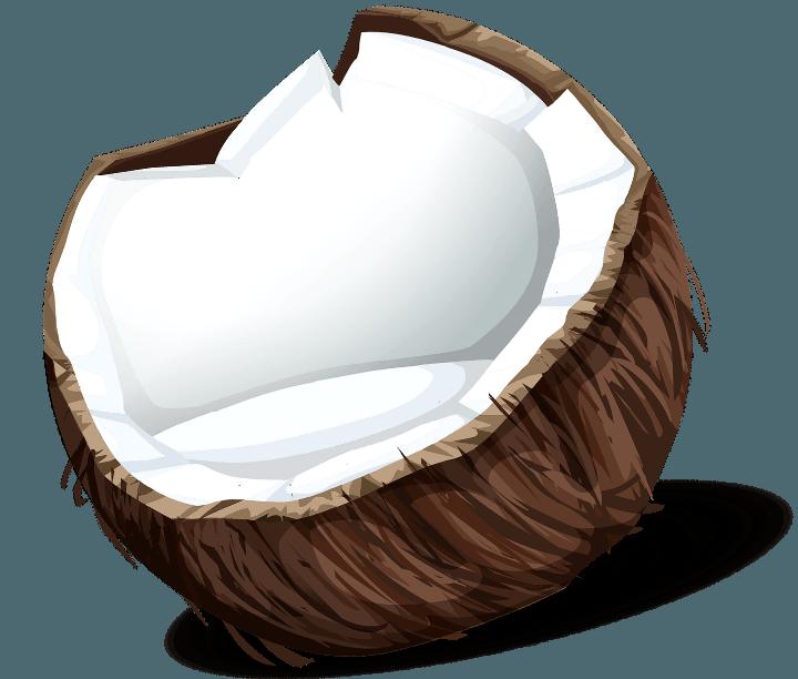 шаблон кокоса