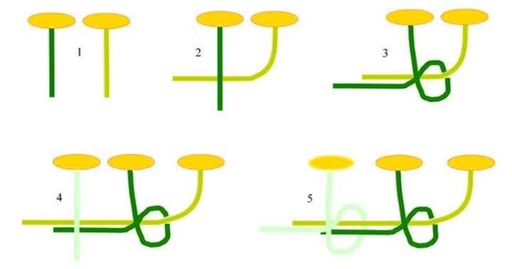 схема плетения венка