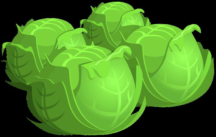 шаблон капусты
