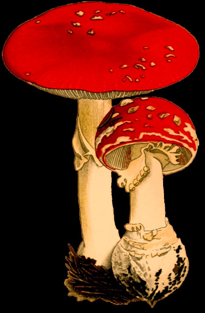 шаблон грибы