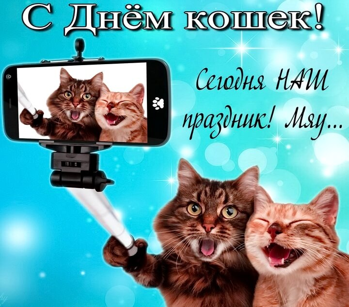 с днем кошек