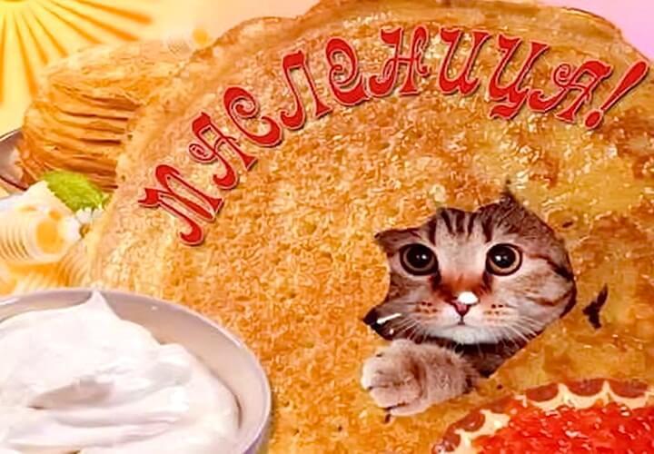 открытка масленица с котом