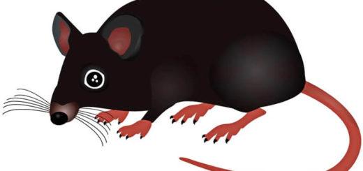 шаблон крысы