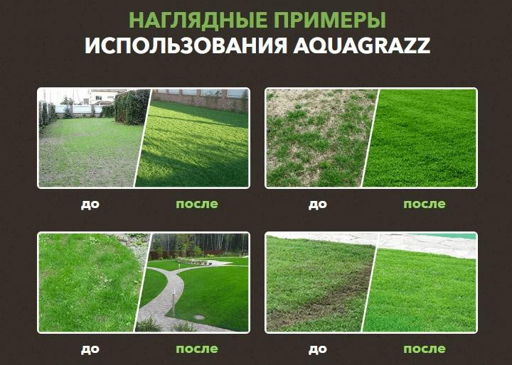 газон какой лучше
